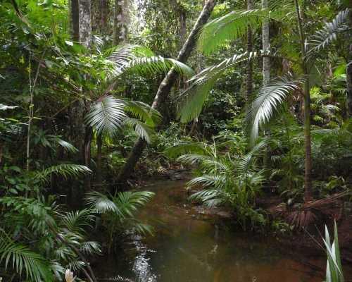 Sopravvivere nella foresta pluviale sopravvivere net - Gli animali della foresta pluviale di daintree ...